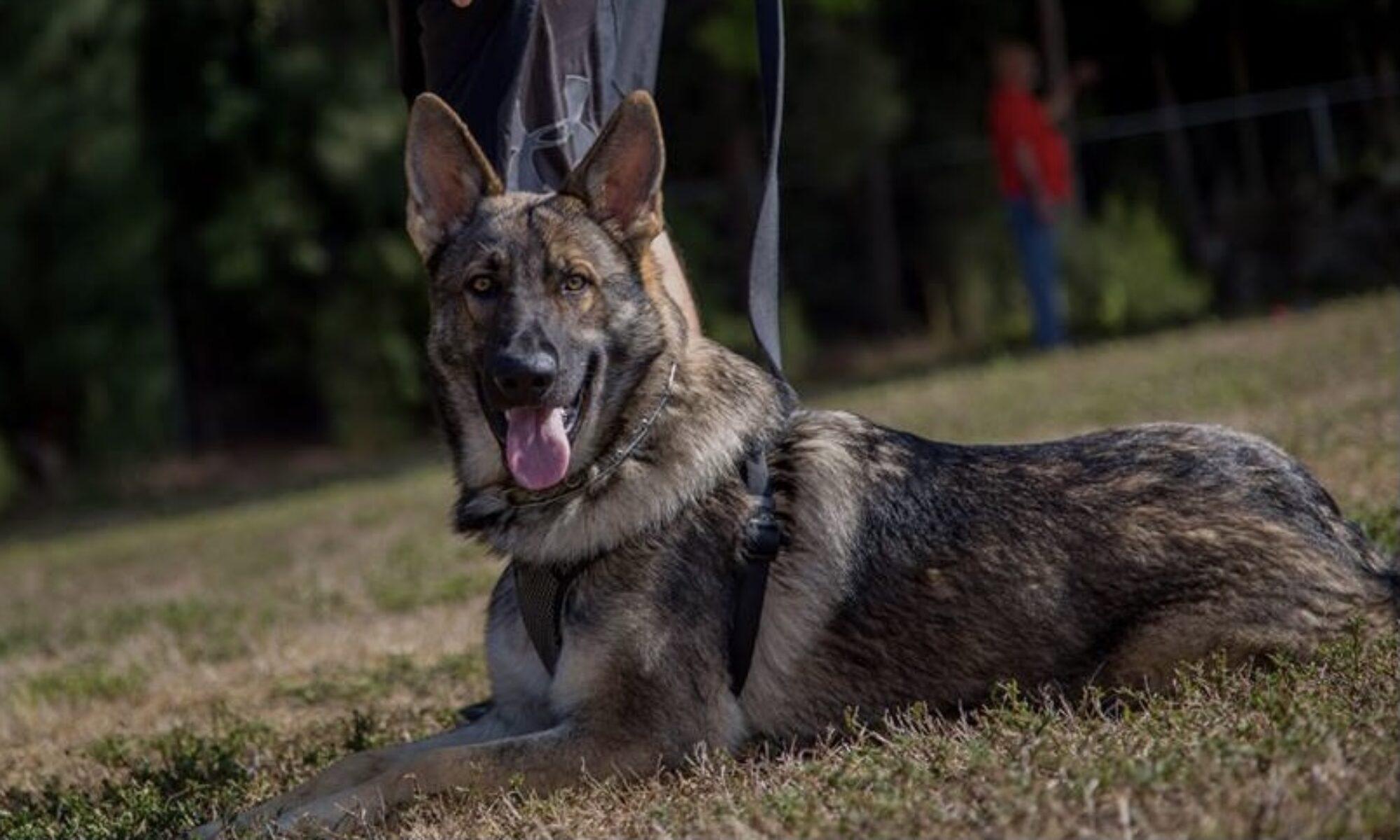 Gulf Coast Schutzhund Club